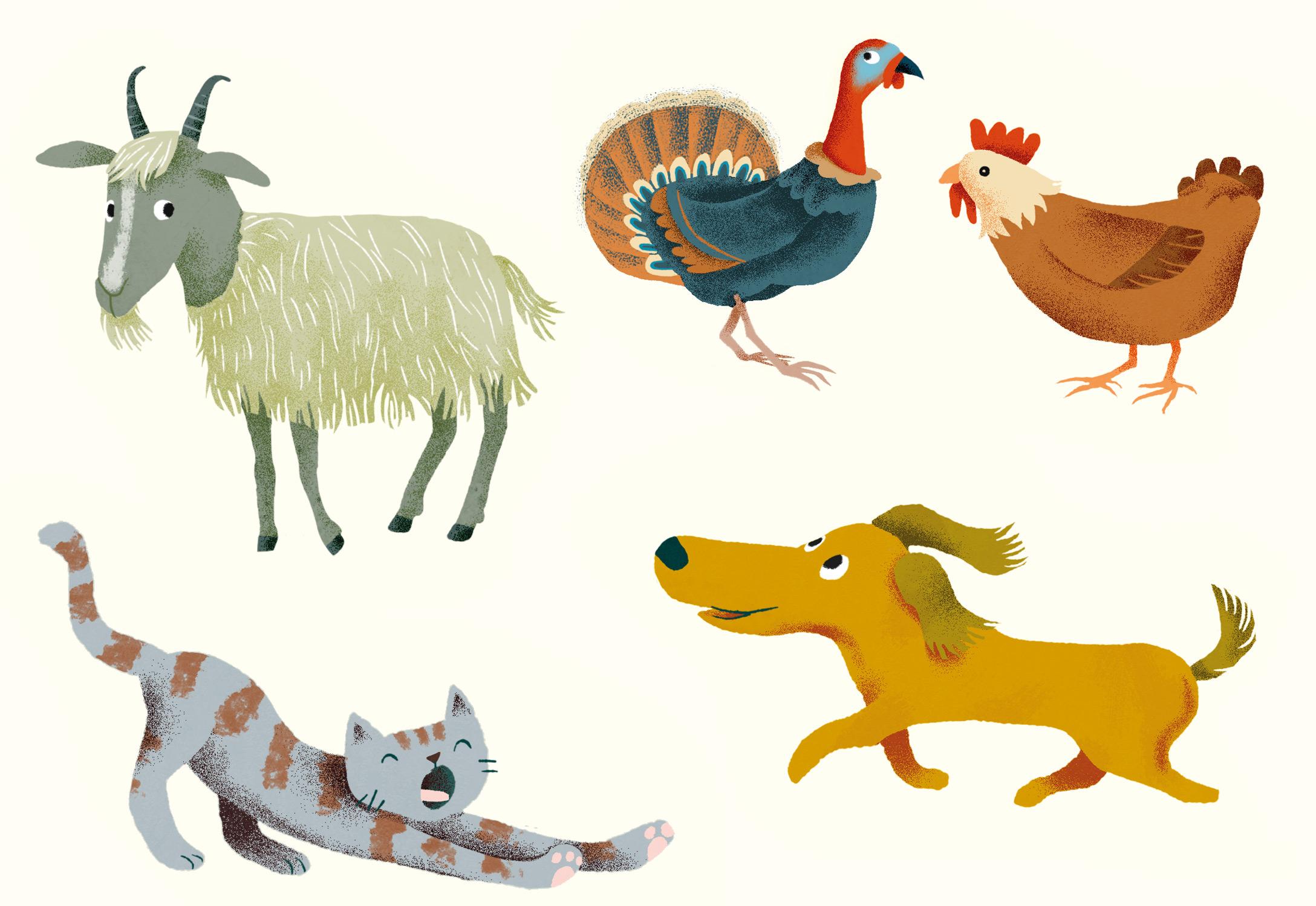 Annalisa Papagna illustration - Farm animals: goat, cat, turkey