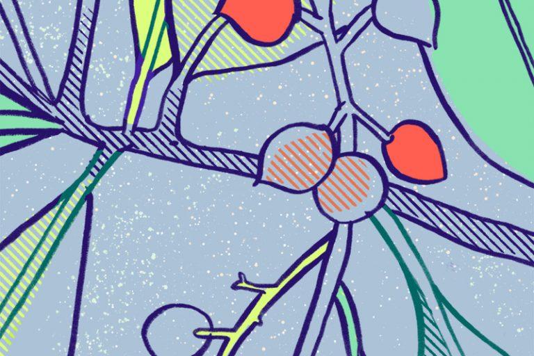 Annalisa Papagna illustration - Laurocerasus (detail)