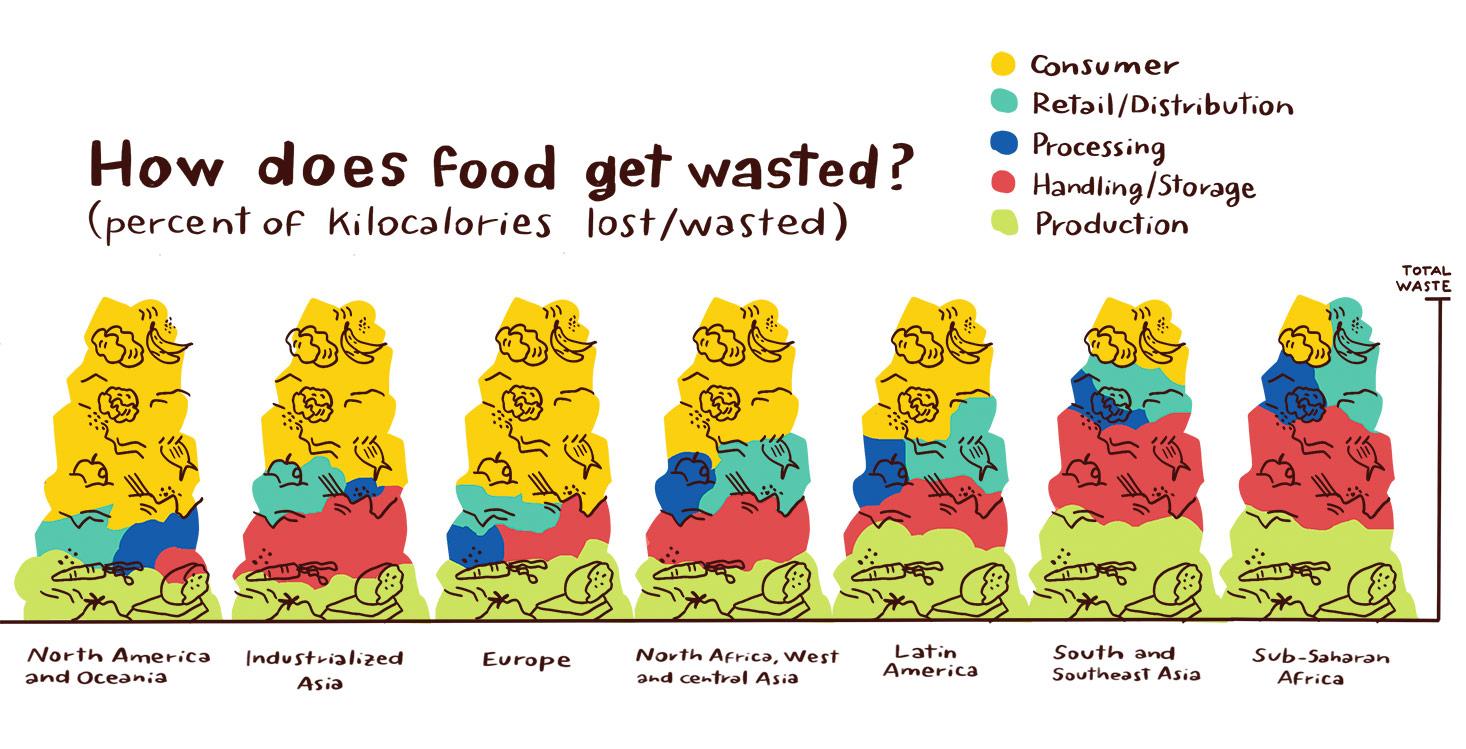 Food waste graph, illustration by Annalisa Papagna